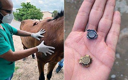 Prefeitura de Serrinha resgata cavalos baleados às margens de rodovia