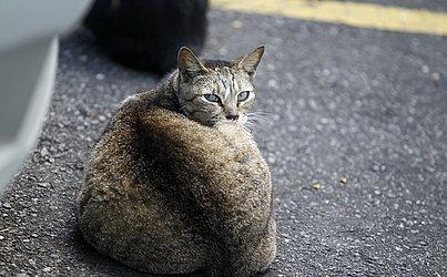 Mais de 100 gatos foram alvos de envenenamento e mutilações no Conjunto Habitacional Reitor Edgar Santos, no Engenho Velho de Brotas.