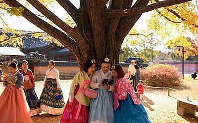 Visitantes vestidas com as tradicionais hanbok posam para fotos sob árvores de ginkgo no palácio Gyeongbokgung em Seul.