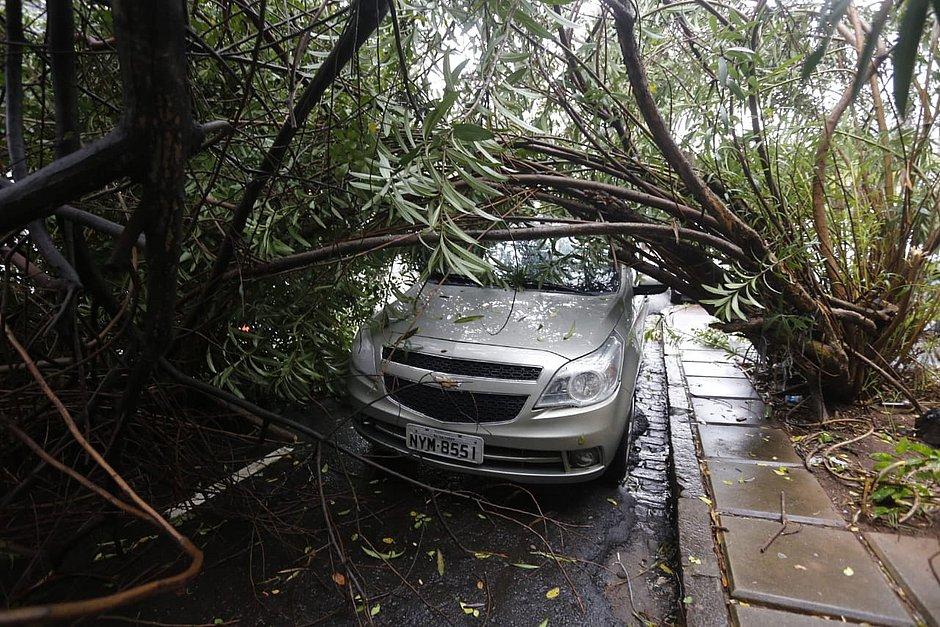 Galho de árvore desaba em cima de carros e interdita parte da Av. Princesa Isabel