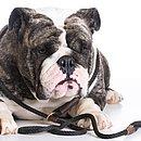 Segundo especialistas, cães braquicefálicos não deveriam usar o modelo