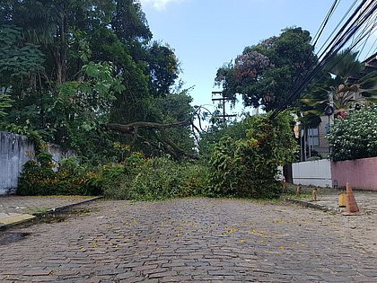 Galho de árvore caiu sobre rua em Ondina (Foto: Nilson Marinho/CORREIO)