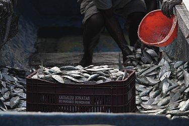 A sardinha, que chega a ter o quilo vendido por R$ 1 em dias comuns, era comercializada por R$ 5 por conta da alta demanda.