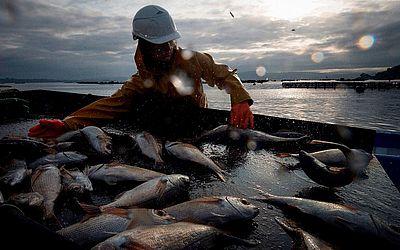 Fazenda de peixes em Lorbe, noroeste da Espanha, produz cerca de 200 toneladas de pargo por ano.