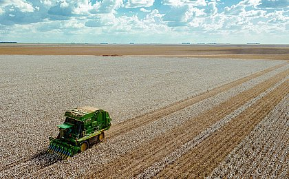 Produtores rurais do oeste ganham mais tempo para colher safra recorde de algodão