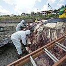 Trabalhadores retiram partes da carcaça do animal de 39 toneladas