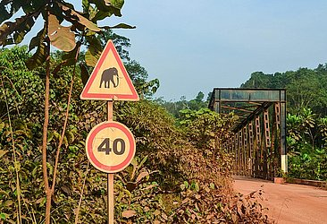 No Gabão, é bom checar se não há um elefante na ponte