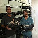 Há três meses, Edgard Pinheiro e Edirlan Sampaio  começaram a vender e produzir os cogumelos