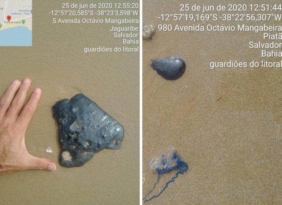 Novas manchas de óleo aparecem nas praias de Piatã e Jaguaribe em Salvador