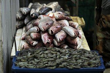 Apesar do preço, o peixe ainda tem muita procura.