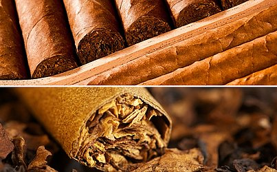 Tabaco produzido no Recôncavo baiano corre por fora