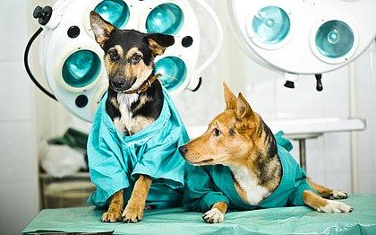 Castração de cães e gatos: entenda tudo sobre o assunto
