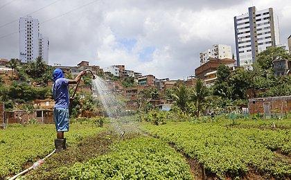 Bahia: estimativa da safra de grãos tem queda de 16,7% em 2019