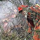 Bombeiro enfrenta o fogo em região de vegetação densa