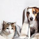 Segundo pesquisa do Instituto Brasileiro de Geografia e Estatística – IBGE (2013), no Brasil, existem mais de 132 milhões de animais domésticos