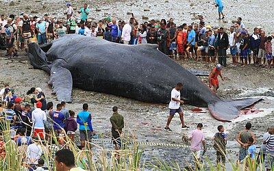 Curiosos ao redor da baleia