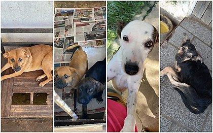 Idosa morre e deixa mais de 30 cães sem lar em Mar Grande