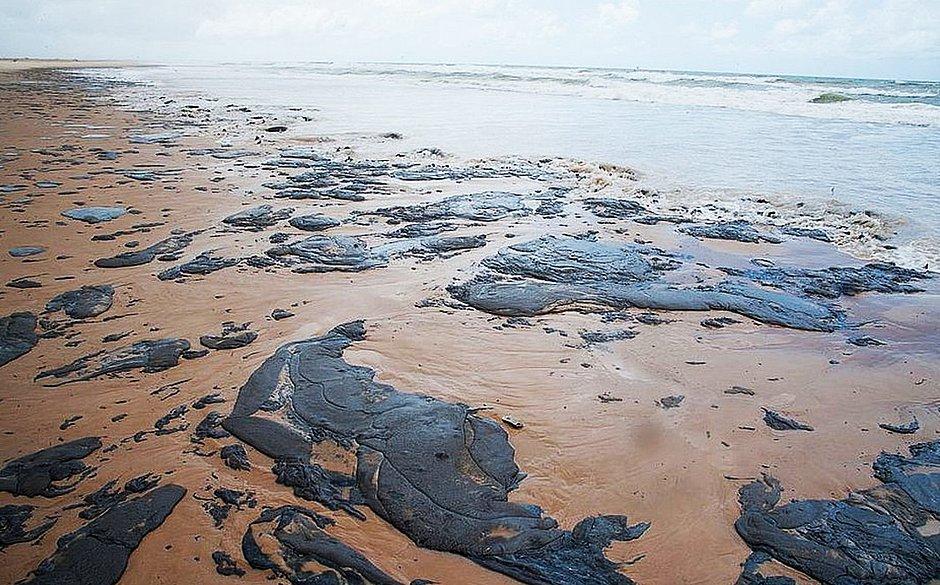Resultado de imagem para Animais sofrem e morrem com petróleo nas praias do nordeste
