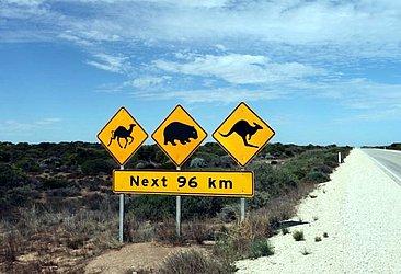 Na Austrália, diferentes tipos de animais podem cruzar a pista