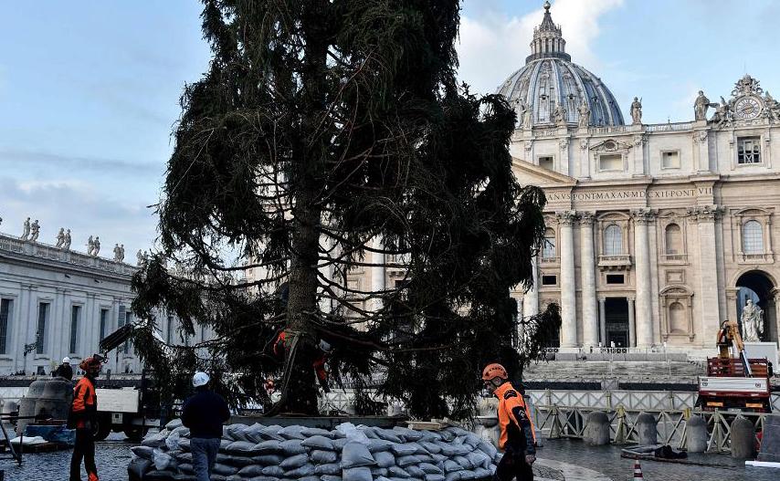 Instalação da árvore de Natal - um abeto da região de Friuli Venezia Giulia - na Praça de São Pedro no Vaticano.