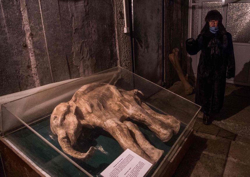 Rozalia Ivanova, administradora do Museu de história de Permafrost exibe um mamute bebê congelado em uma do Instituto, na cidade de Yakutsk.