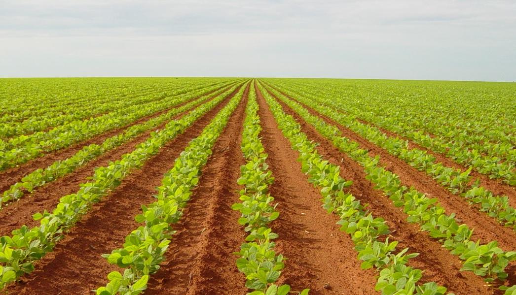O aumento na quantidade de dias com temperaturas acima de 34 graus compromete a agricultura