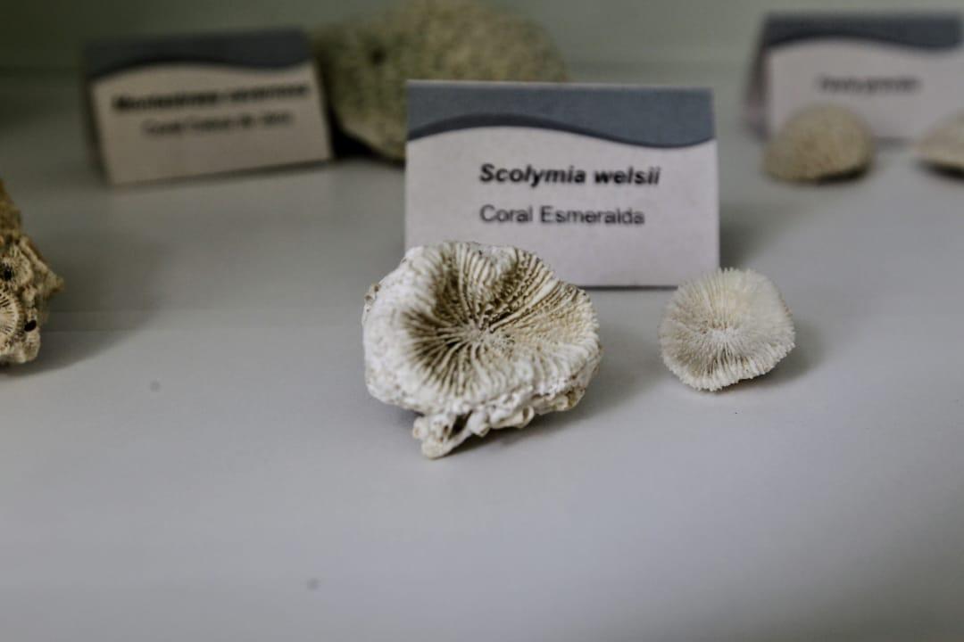Corais estão na exposição Oceanos Vivos
