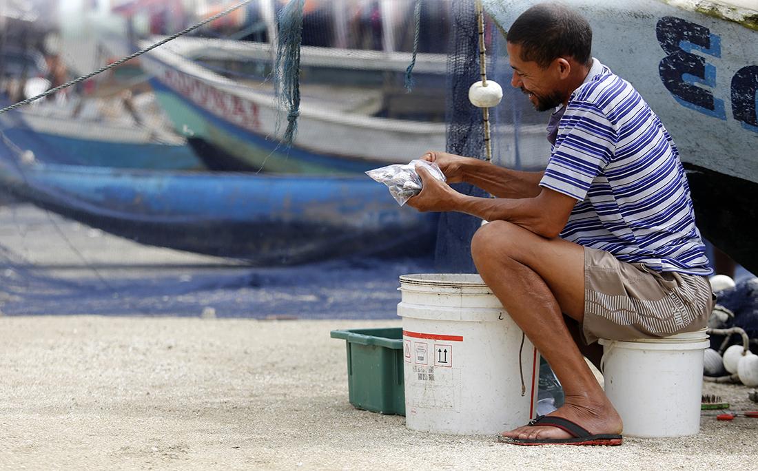 No Porto da Sardinha revendedores compram e tratam o peixe para ser revendido em outros locais da cidade.