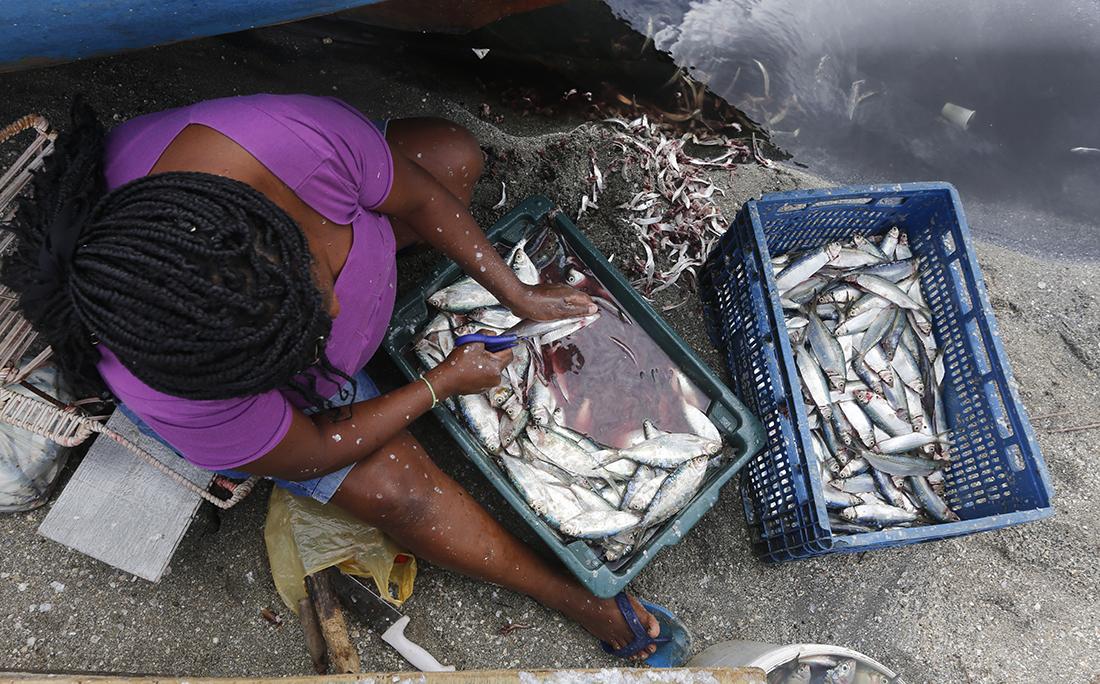 Tratadeiras, como Jucimeire dos Santos, ganham 20 reais para limpar 40 quilos de sardinha.