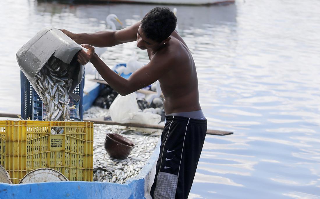 O peixe é vendido em caixas diretamente do barco.