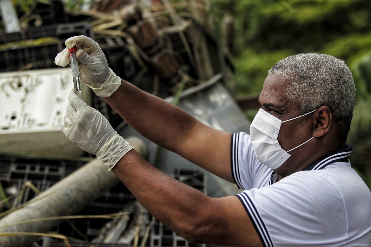 Agente recolhe larvas de mosquito de criadouro