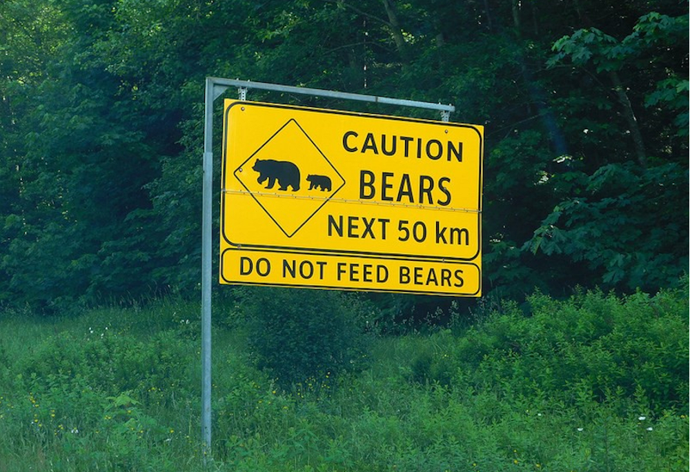 No Canadá, é bom prestar atenção se há um urso na estrada
